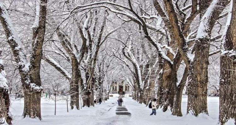 Colorado-State-University